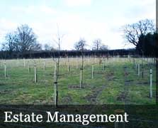 Estate Management